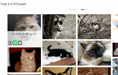 CC Image Search on cat